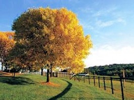 A lovely yellow tree
